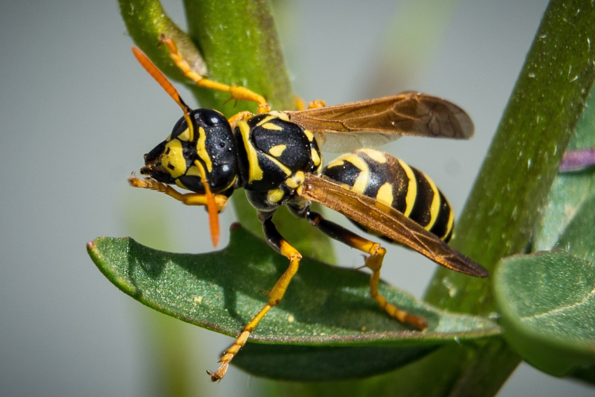 Wasp crawling on leaves of a plant.